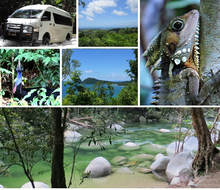 Visit the Daintree Rainforest